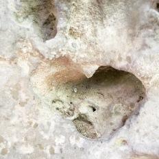 Limestone heart, Avignon