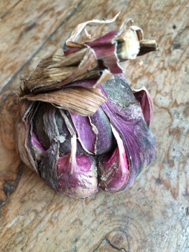 Provencial Purple garlic, Avignon