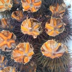Freshly caught sea urchin, Gallipoli