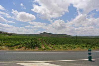 Rioja landscape
