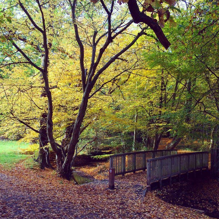 autumninhillyfields